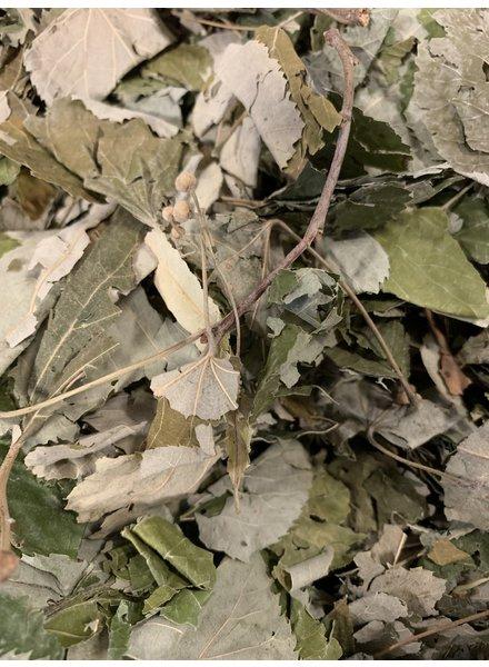 Linden Leaves 1.5 - 15 kg