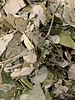 Lindebladeren - Tilia cordata
