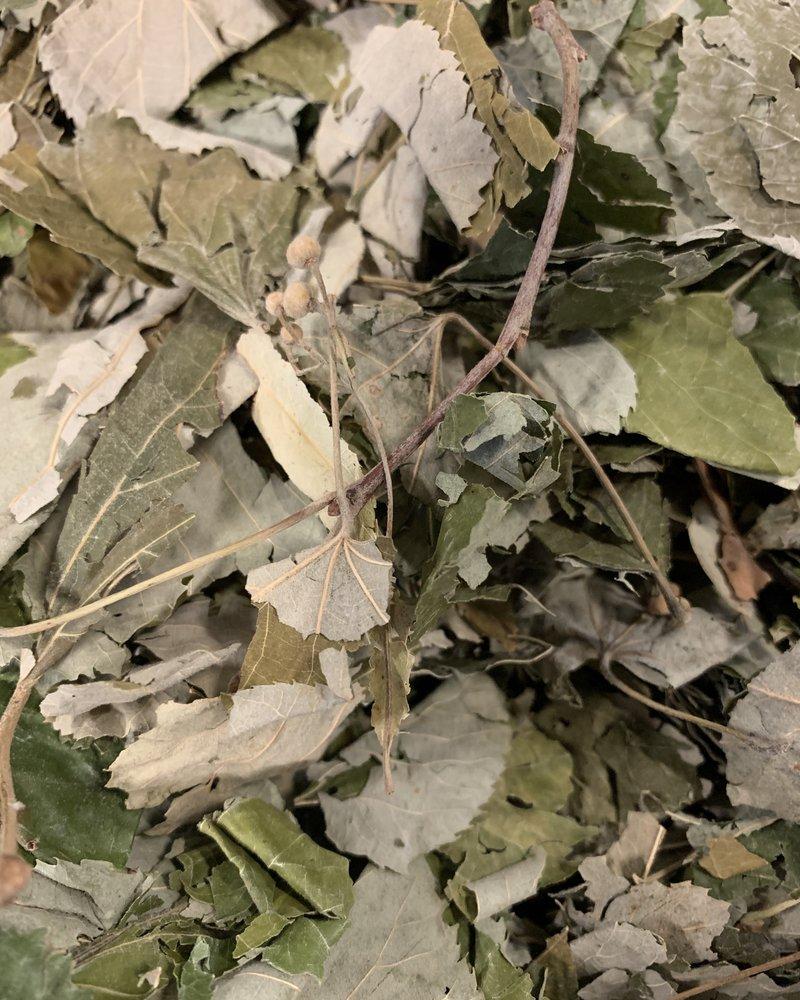 Linden Leaves - Tilia cordata