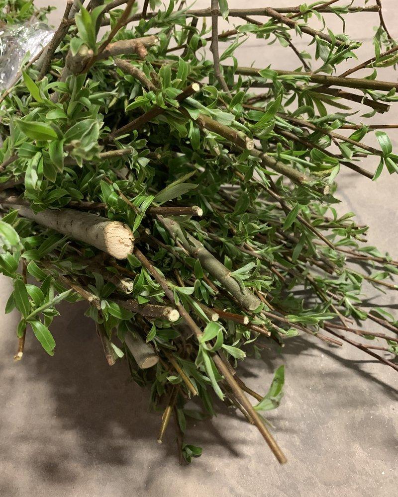 Happy rabbits Branches de saule fraîches