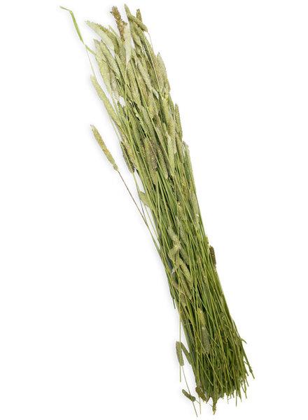 JR FARM Timothy Harvest