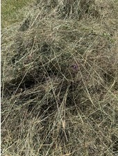 Happy rabbits German Herbal hay Pure nature,  cut july 2020 BALLS