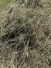 Happy rabbits German Herbal hay Pure nature,  cut july 2020