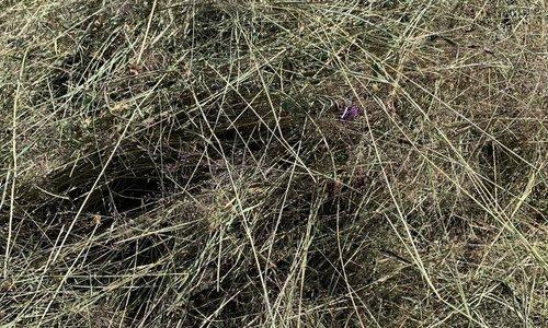 Foin aux herbes
