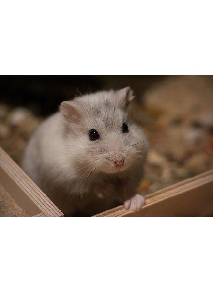 Cadeaupakket Hamster 2020