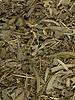Salie - Salvia officinalis