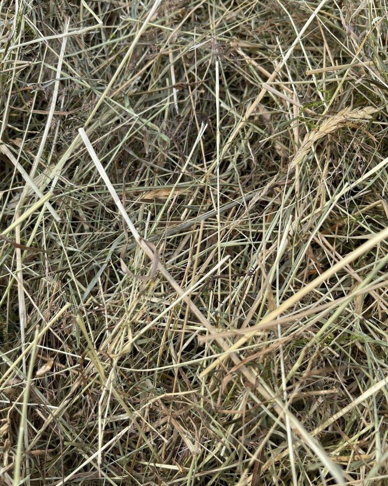 German Herbal hay Pure nature,  cut july 2021 BALLS