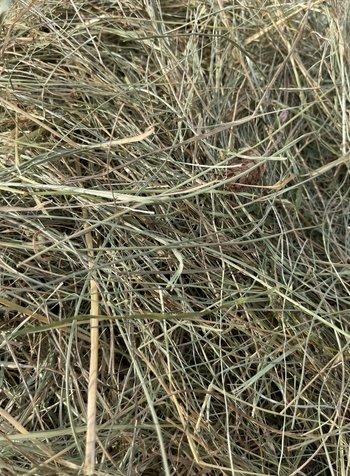 Premium German herbal hay, cut july 2021