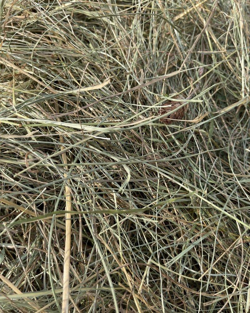 Premium German herbal hay