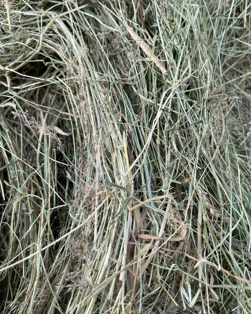 Belgian nature hay
