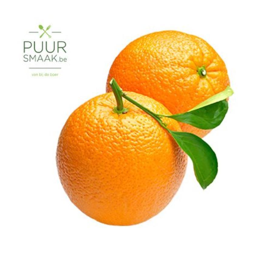 Appelsien Bio klein Italië-1