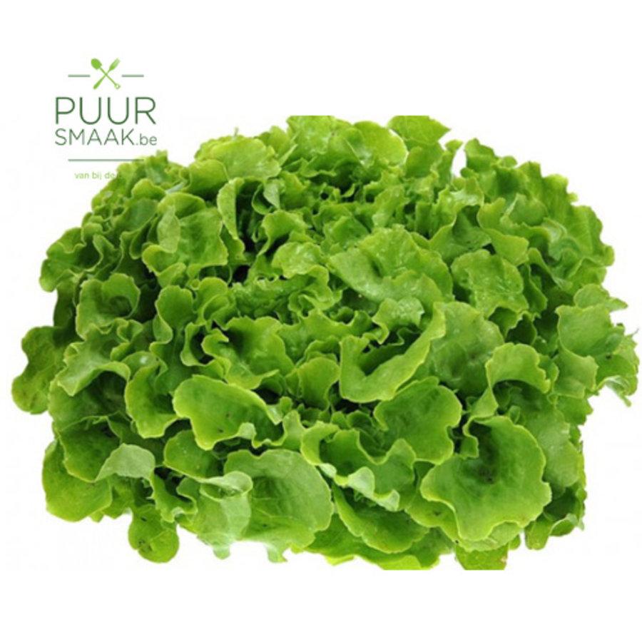 Eikenbladsla groen (met wortel)-1