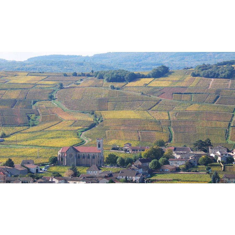 Mâcon-Villages 'Les Mulots'-2