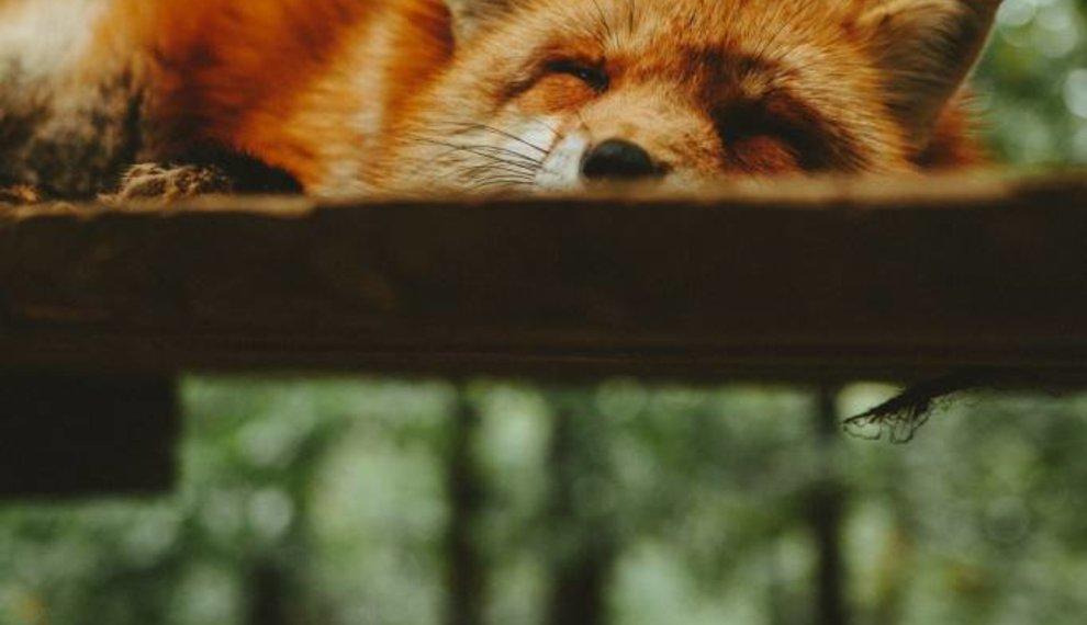 6 dingen die je huis transformeren tot een rustoord