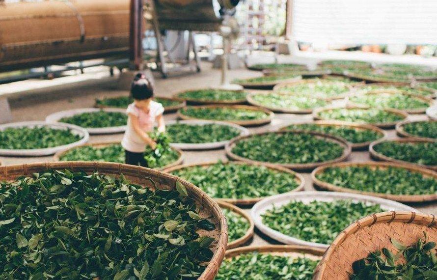 Koffeinempfindlichkeit und Tee
