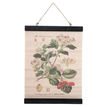 Botanic school plate - flowers / berries
