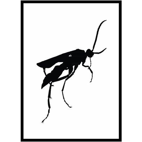 Zwart wit insecten poster