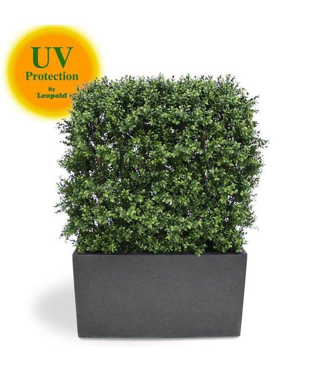 Kunsthaag Buxus 80x100 cm UV
