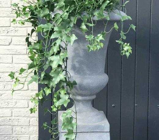 Artifical outdoor Ivy