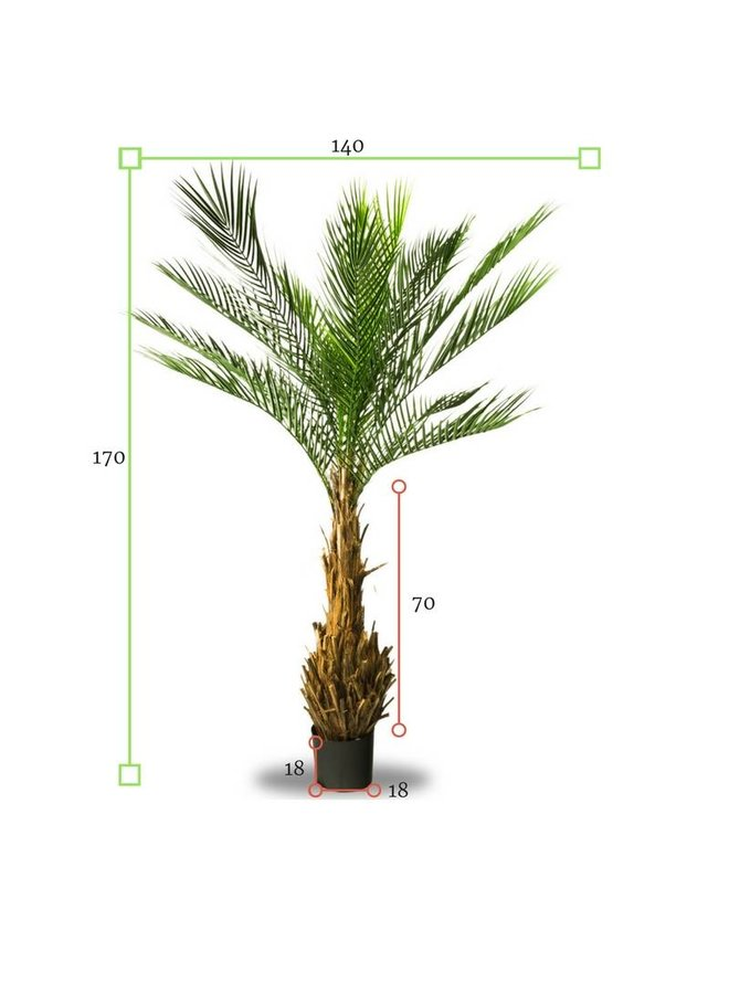 Artificial outdoor Phoenix palm tree170 cm UV protected