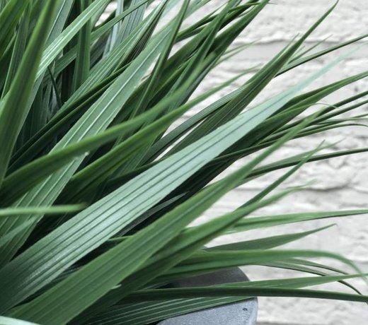 Kunst siergras planten voor buiten