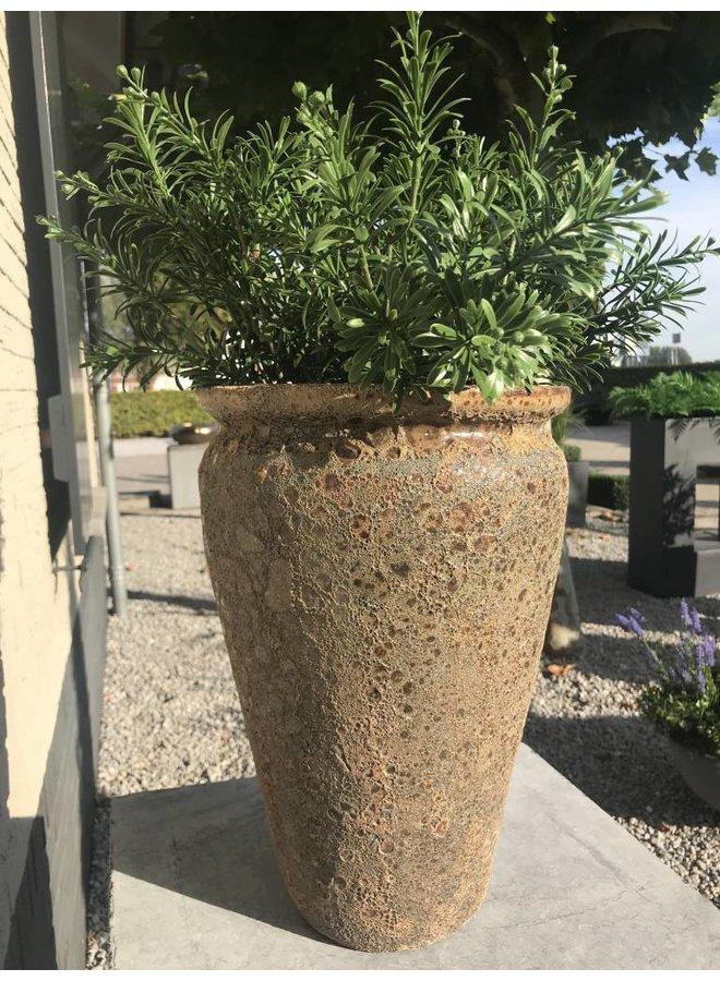 Crossostephium Tak 45 cm voor buiten
