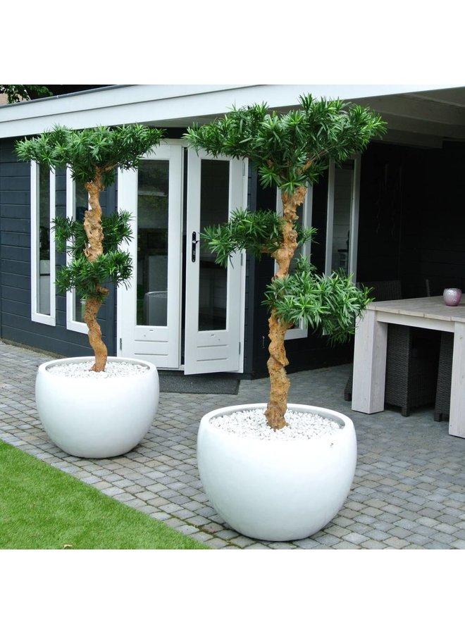 Artificial outdoor Podocarpus Bonsai tree 160 cm UV protected
