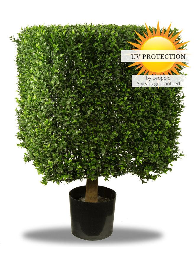 UV Buxus vierkant 50 cm