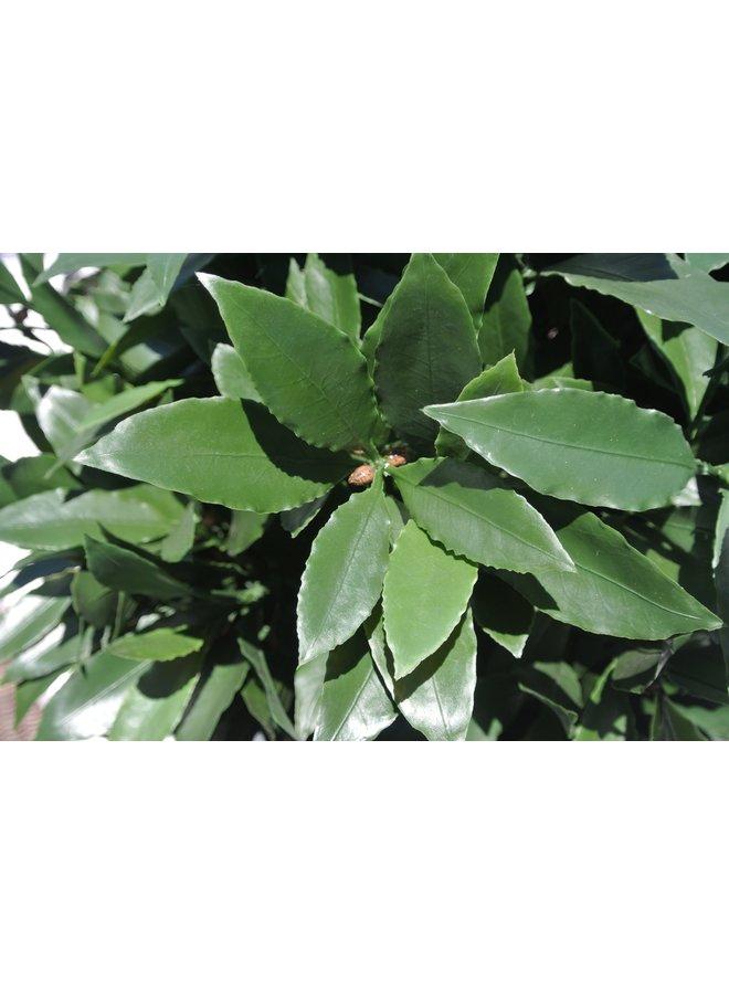 Artificial outdoor Laurel tree 120 cm UV-protected