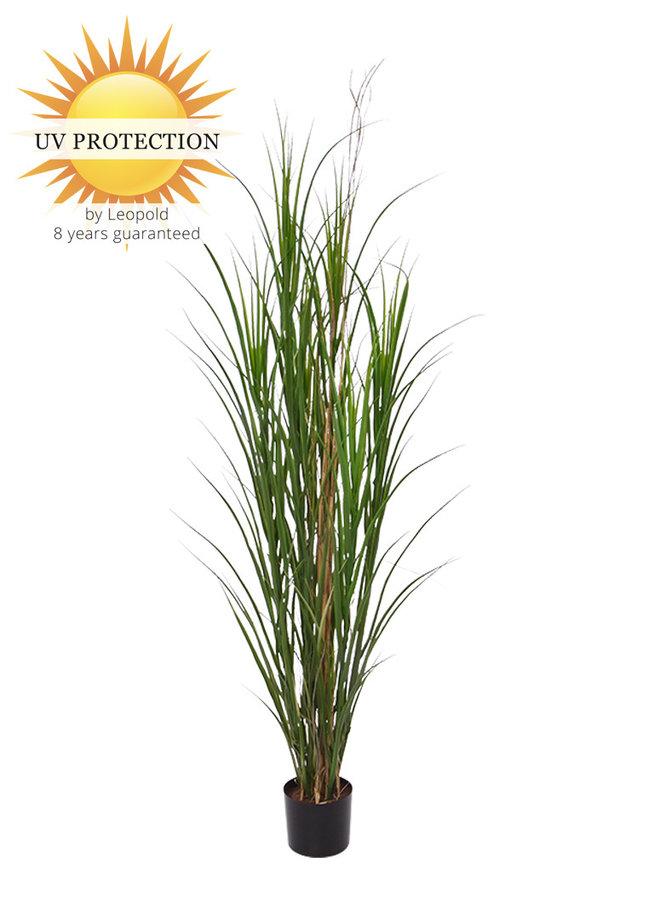Hoge buiten kunstgras met  UV protectie en 8 jaar kleurgarantie
