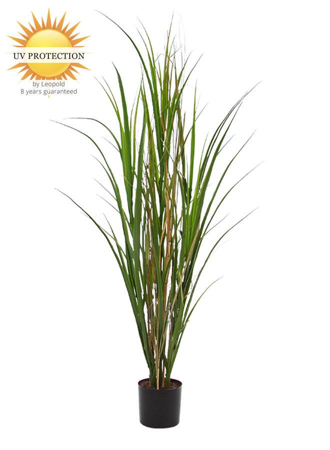 Kunstplant Rietgras 120 cm UV