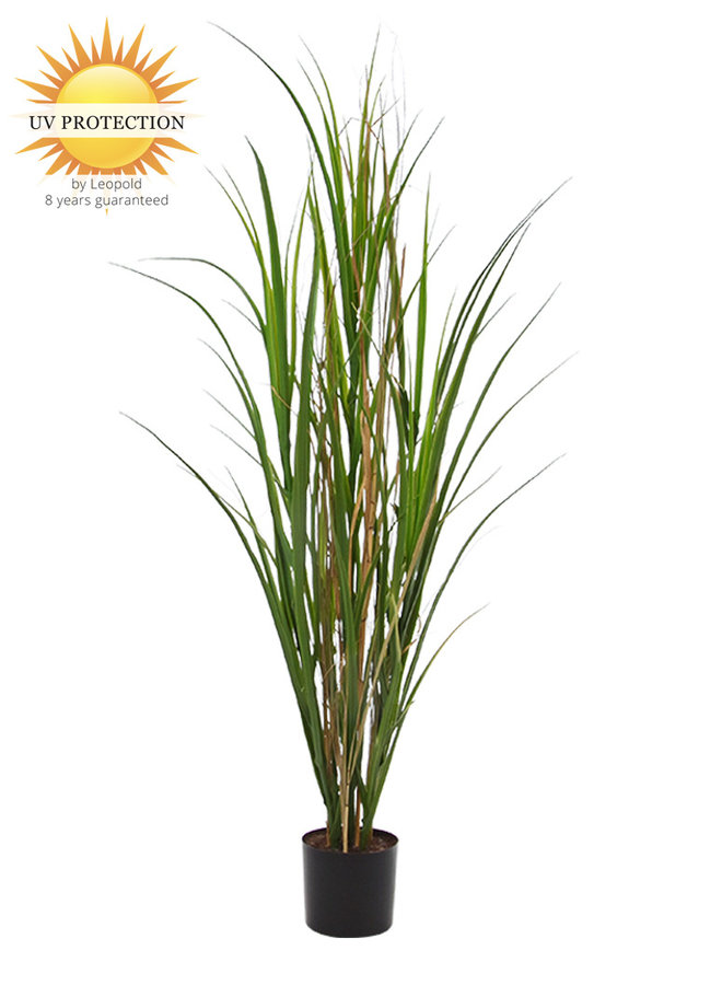 Outdoor Artificial Reed grass plant 120 cm UV