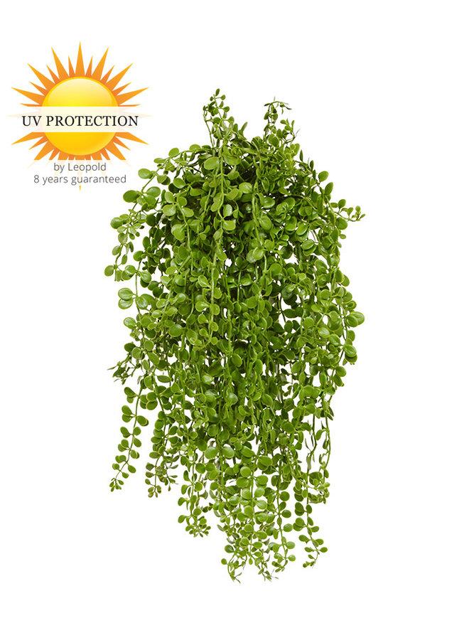 Dischidia nummularia kunsthangplantje 40cm uv
