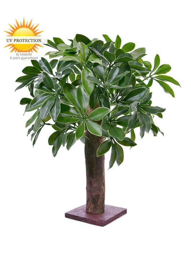 Schleffera kunstplant op ministam 50 cm  UV voor buiten