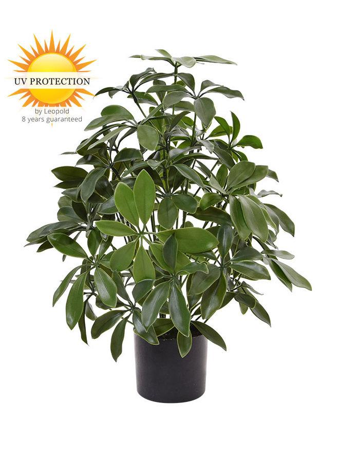 Artificial outdoor Schefflera plant 50 cm with UV protection