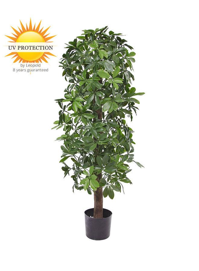 Kunstboom Schefflera kolom 120cm  UV voor buiten
