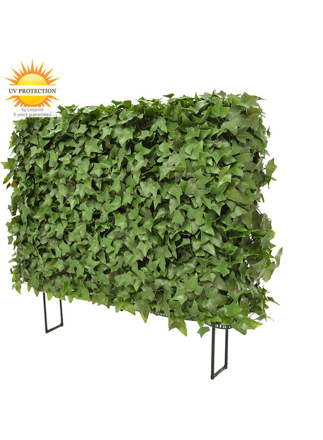 Artificial outdoor Ivy hedge on frame UV protected