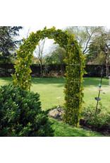 pro garden Rozenboog