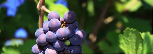 Promotie Pinot Noir! 15% Korting
