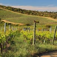 Wijnjournaal, januari 2019, aandacht voor Chili