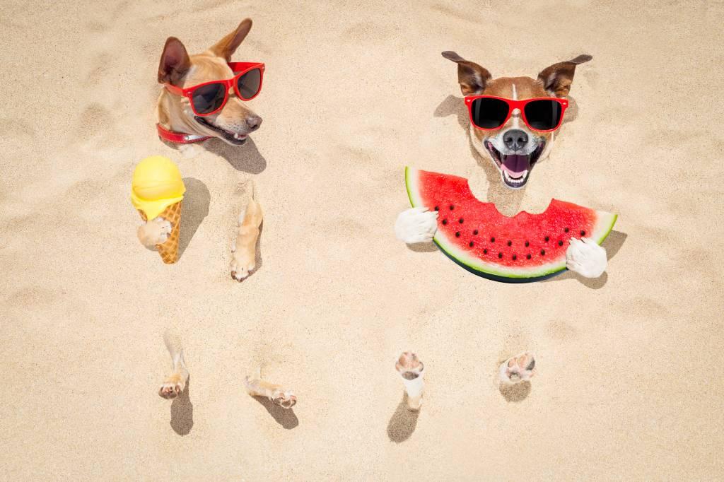 Wees voorbereid met dit warme weer! Enkele tips...