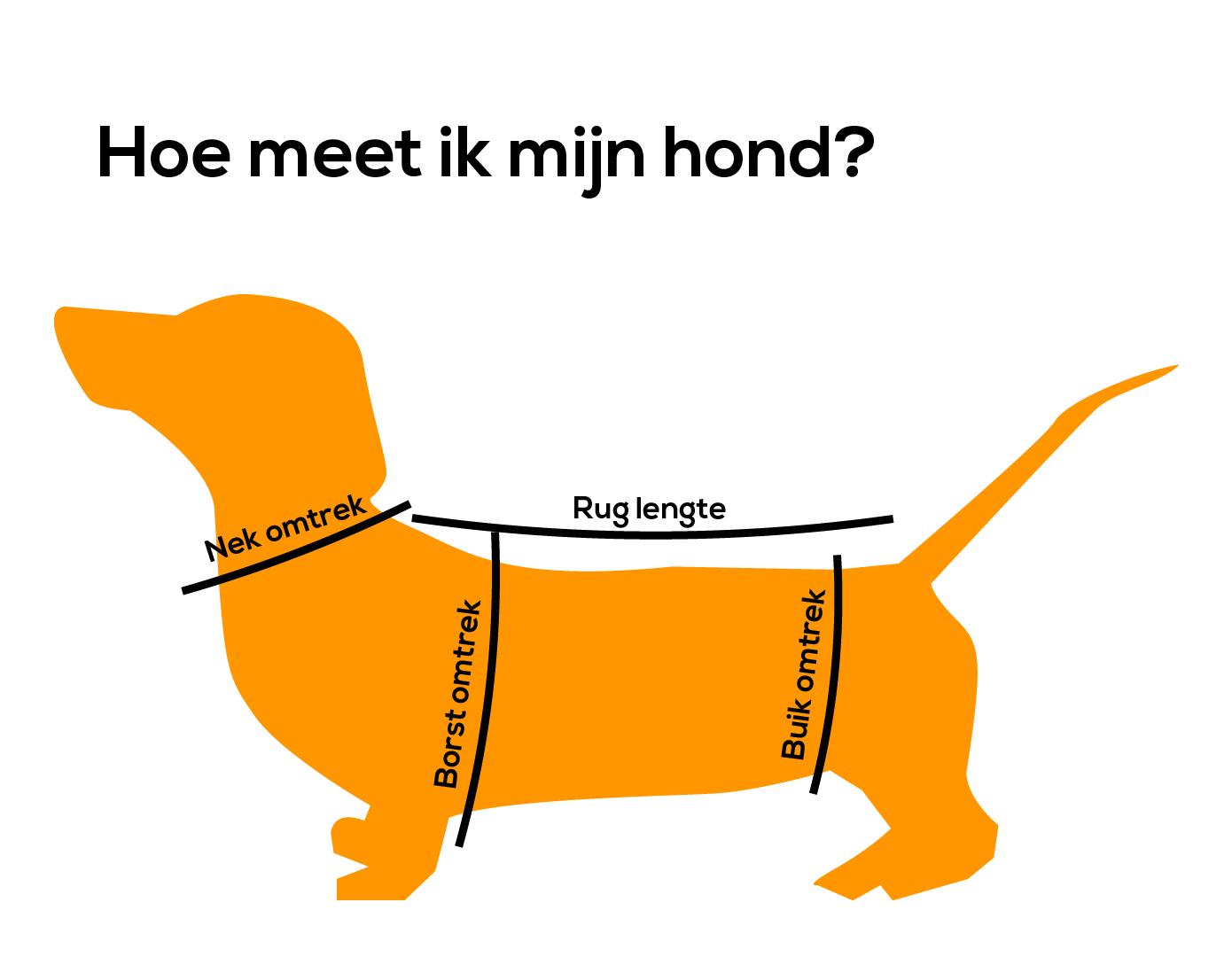 Hoe meet ik mijn hond?