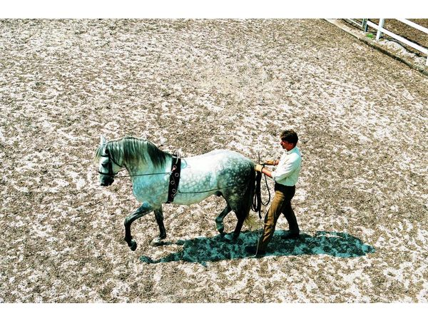 Verlängerung HB-Classic-Longiergurt für sehr kräftige Pferde - Kaltblut