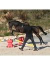 Longiergurtunterlagen - Pferdegerechter Schutz für den Longiergurt in st-eb Qualität.