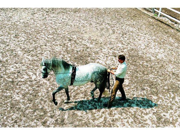 LONGEERSINGEL - Verlengstuk voor zware paarden