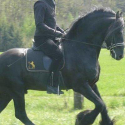 Klassike Dressuur-Coaching met Horst Becker in Niederlanden