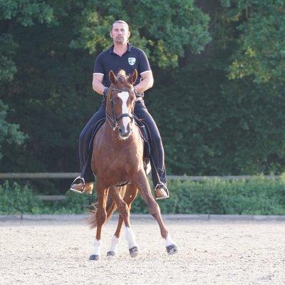 14.10.2019 Klassik Dressuur-Coaching met Horst Becker in Niederlanden