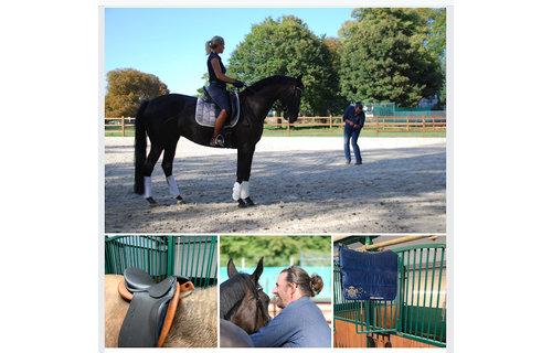 Design by Horst Becker Trainings- & Ausrüstungscheck für ihr Pferd in Ihrem Stall