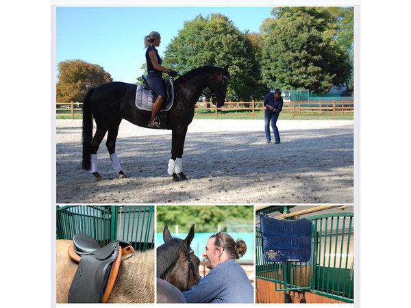 Trainings- & Ausrüstungscheck für ihr Pferd in Ihrem Stall