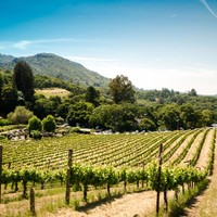 De mooiste wijngaarden ter wereld.